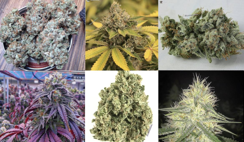 Stärkste Cannabissorten 2018